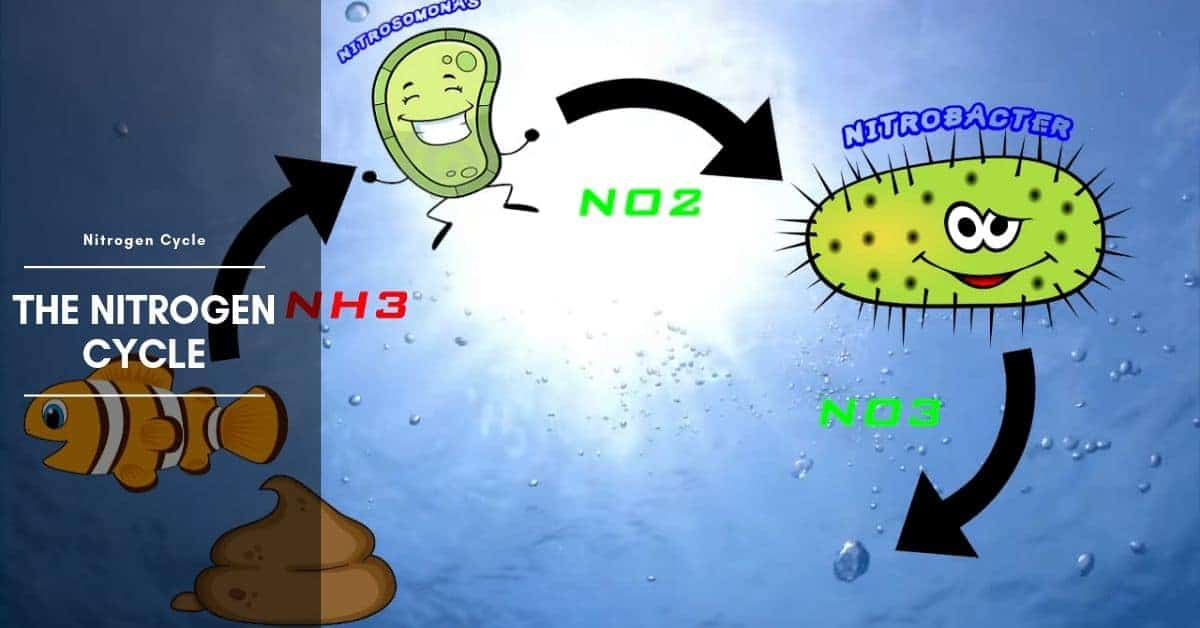 How to Fishless Cycle with Ammonia?