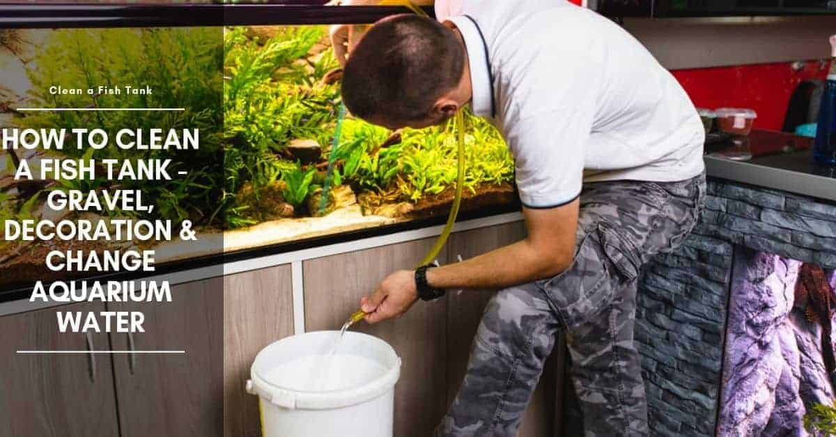 How To Clean a Fish Tank - Gravel, Decoration & Change Aquarium Water