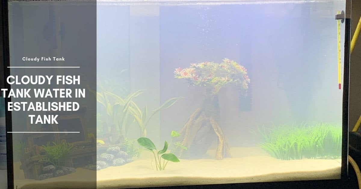 Cloudy Fish Tank Water In Established Tank