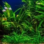 How To Setup a Planted Aquarium Without Co2