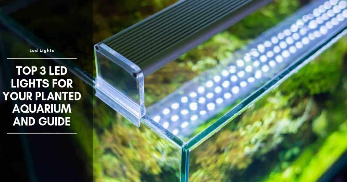 Top 3 LED Lights for Your Planted Aquarium And Guide