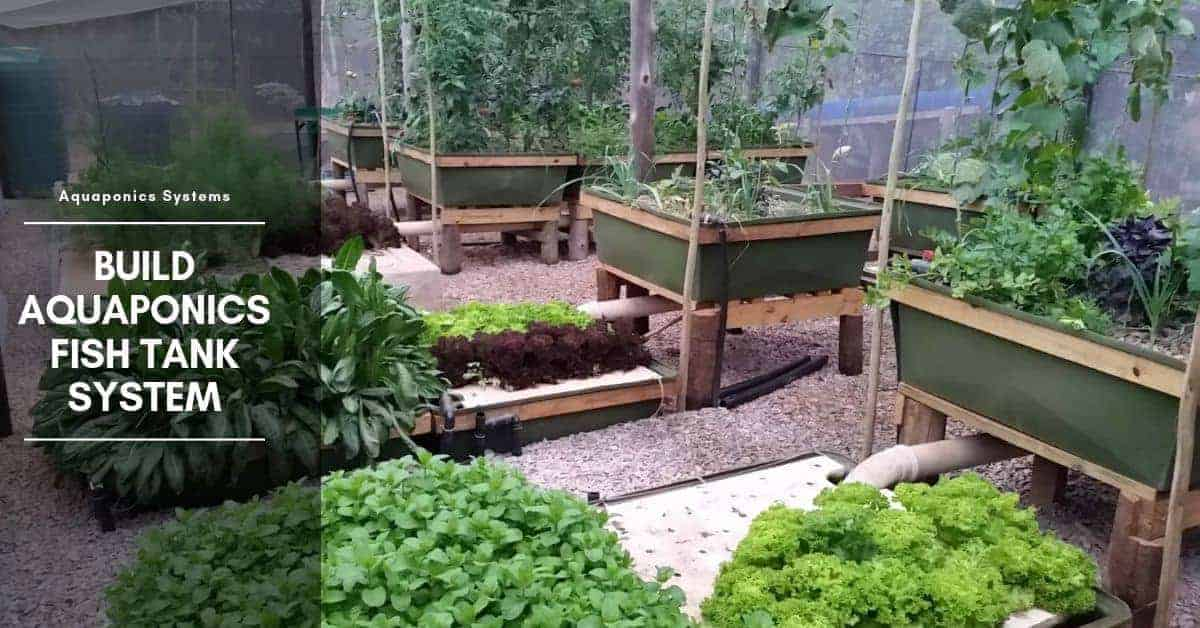 Build Aquaponics Fish Tank System