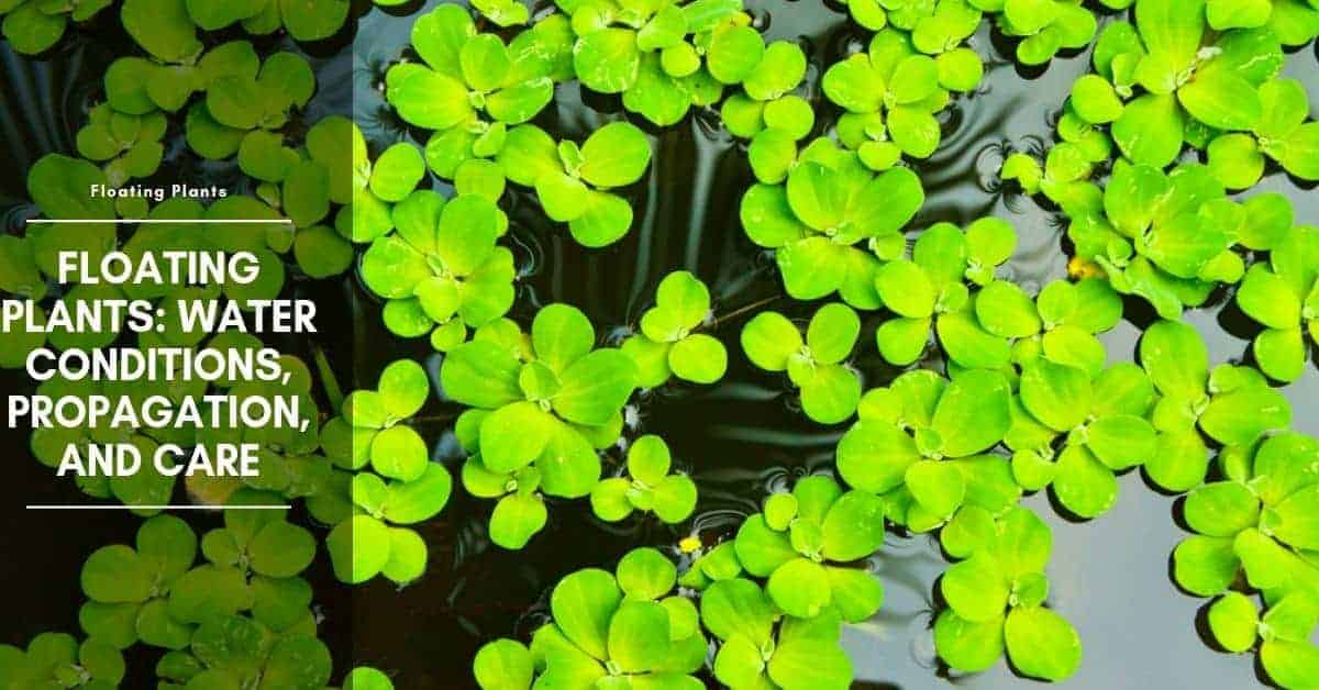 8 Best Floating Aquarium Plants