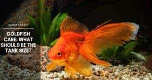 Goldfish Care: What Should Be The Tank Size?