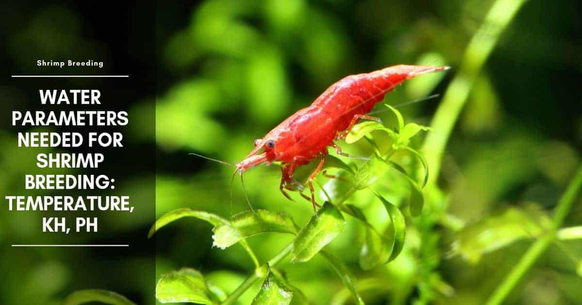 Water Parameters Needed For Shrimp Breeding: Temperature, KH, pH