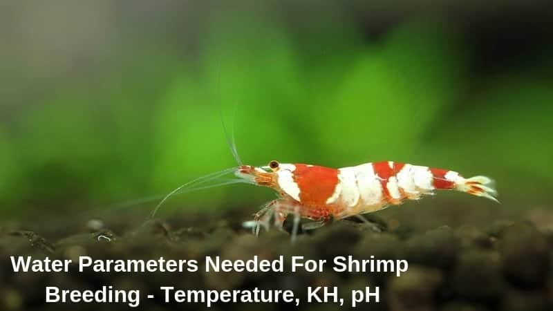 Water Parameters Needed For Shrimp Breeding: Temperature ...