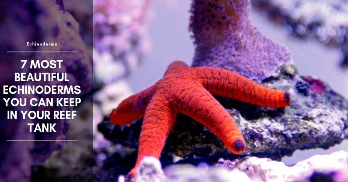 Most Beautiful Starfish You Can Keep In Your Reef Tank