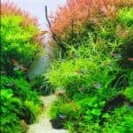 7 Tips for How to Keep Live Plants in an Aquarium – Lighting & Substrate