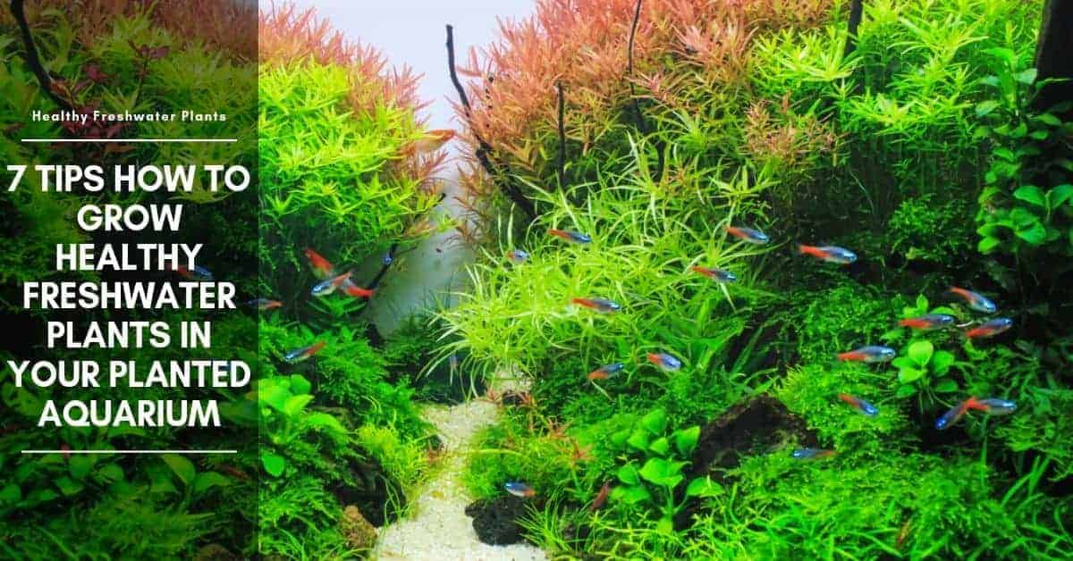 7 Tips for How to Keep Live Plants in an Aquarium - Lighting & Substrate