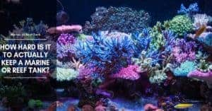 How Hard Is It To Actually Keep A Marine Or Reef Tank?