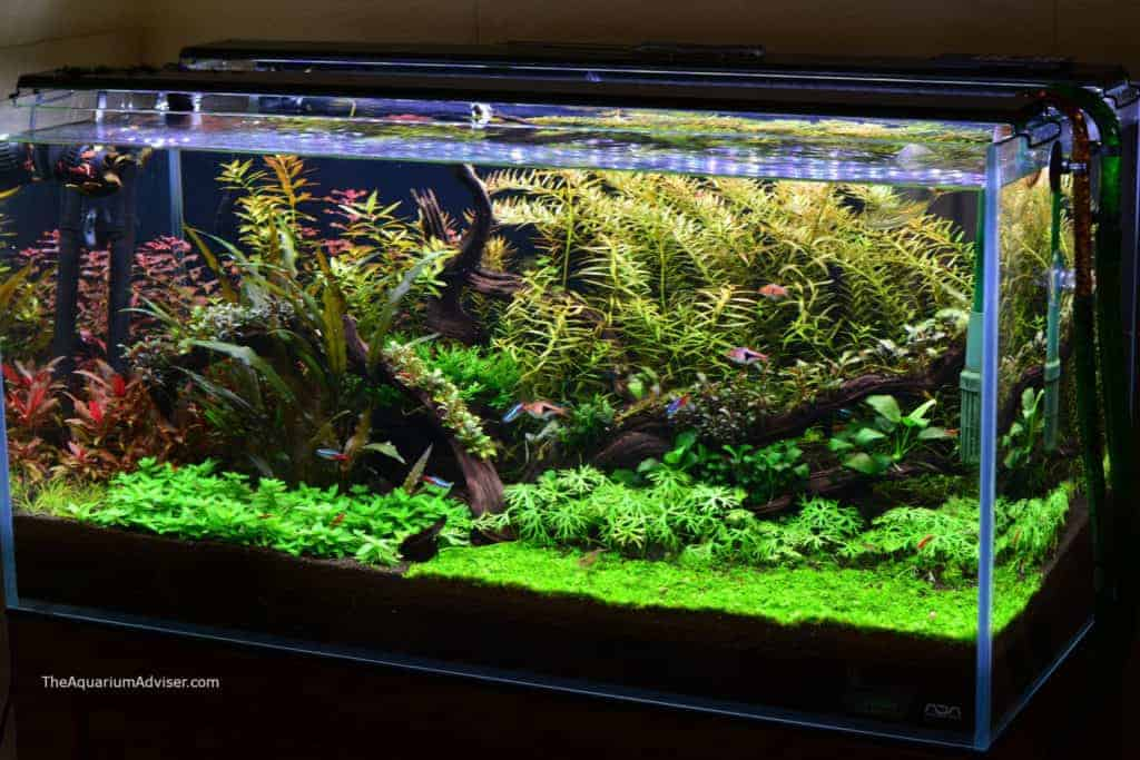 Planted Tank with Co2