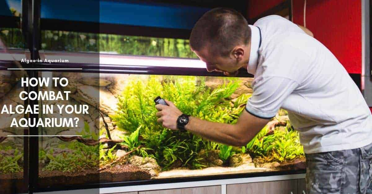 10 Ways to Get Rid of Green Algae in Fish Tank
