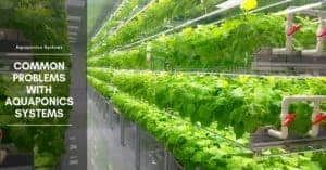 Common Problems with Aquaponics Systems: Diseases and Deficiencies