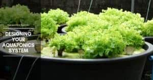 Aquaponics Fish Tank Design: Basic Plans, Growing Conditions & Media