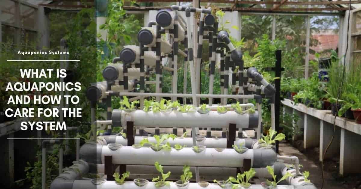 What Is Aquaponics System and How to Care for the System