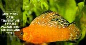 Molly Fish Temperature, Water Parameters, and pH Level