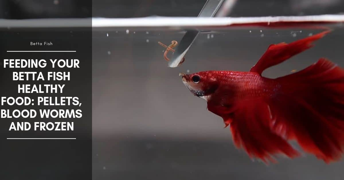Feeding Your Betta Fish Healthy Food: Pellets, Blood Worms and Frozen