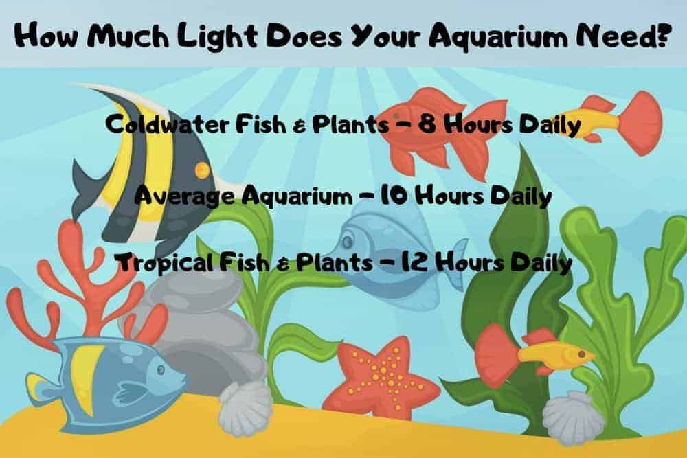 How much light does your aquarium need?