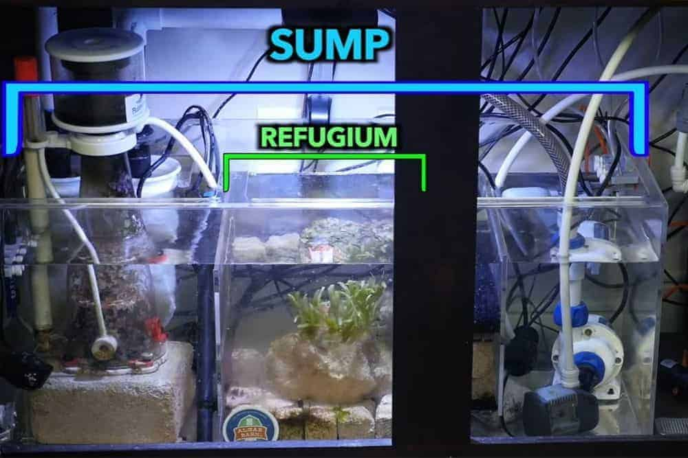 Refugium inside sump