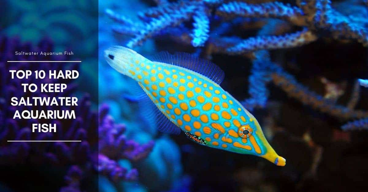 Top 10 Peaceful Saltwater Aquarium Fish