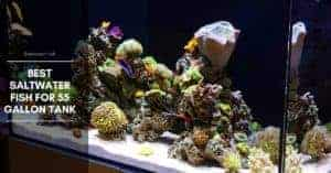 12 Best Saltwater Fish for 55 Gallon Tank