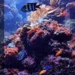 How to Make a Saltwater Tank for Fish? Step by Step