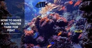 Saltwater Tank Setup Checklist for Reef and Marine