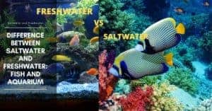 Difference Between Saltwater and Freshwater: Fish and Aquarium