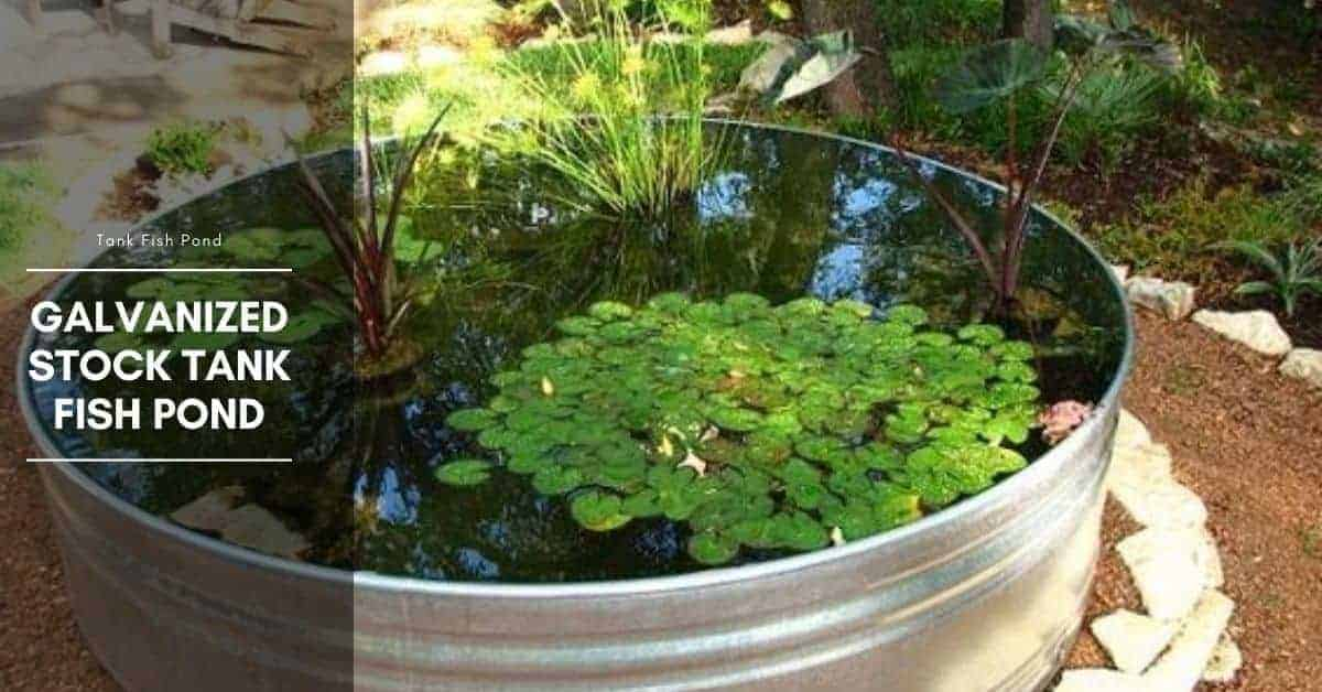 Galvanized Stock Tank Fish Pond