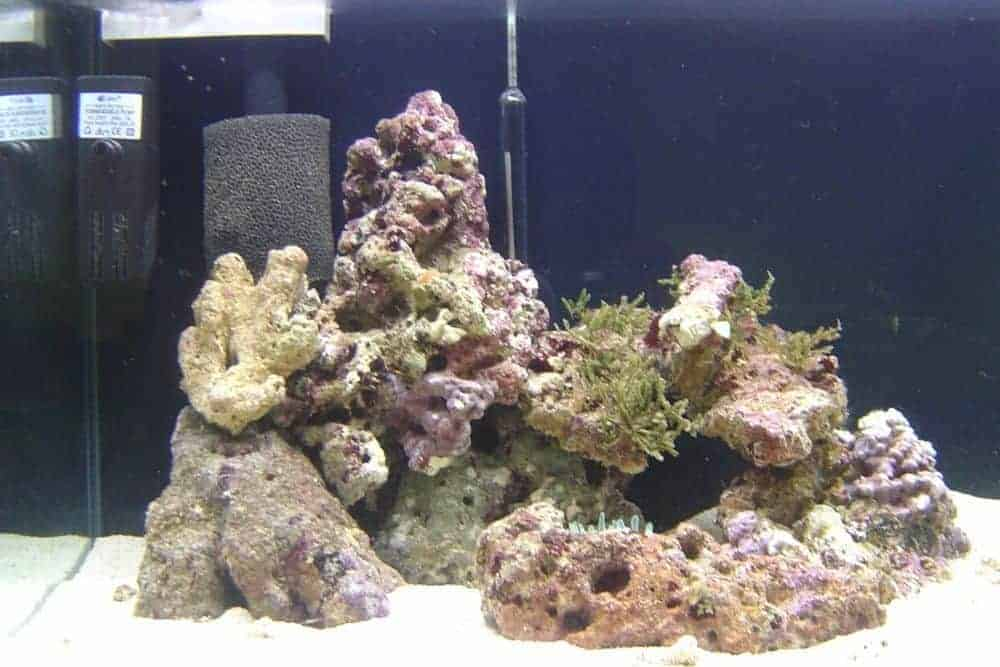Some types of Live Rocks in Tank