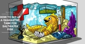 How to Set Up a Quarantine Tank for Saltwater Fish