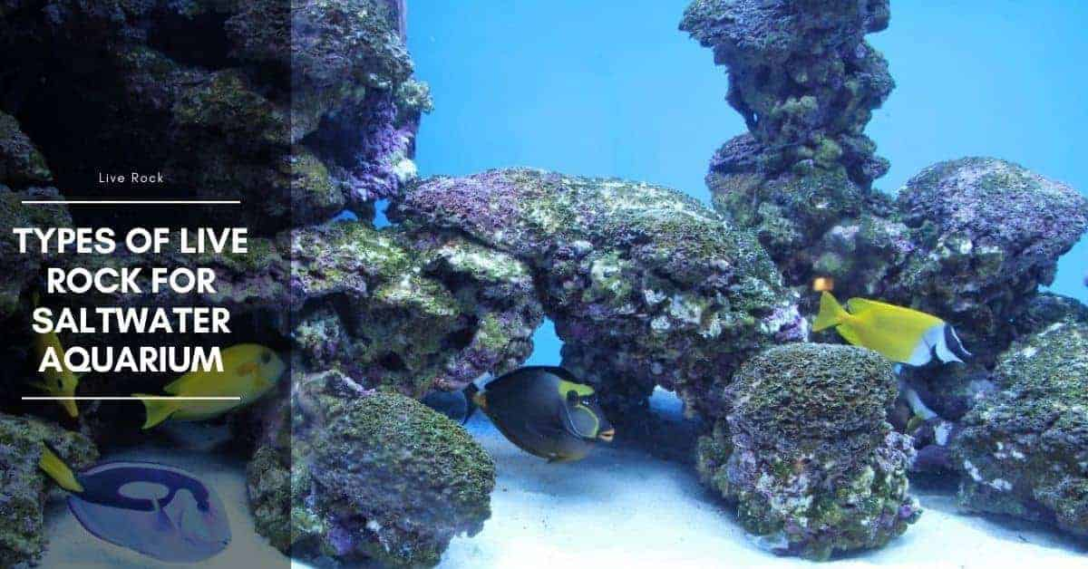 Types of Live Rock for Saltwater Aquarium
