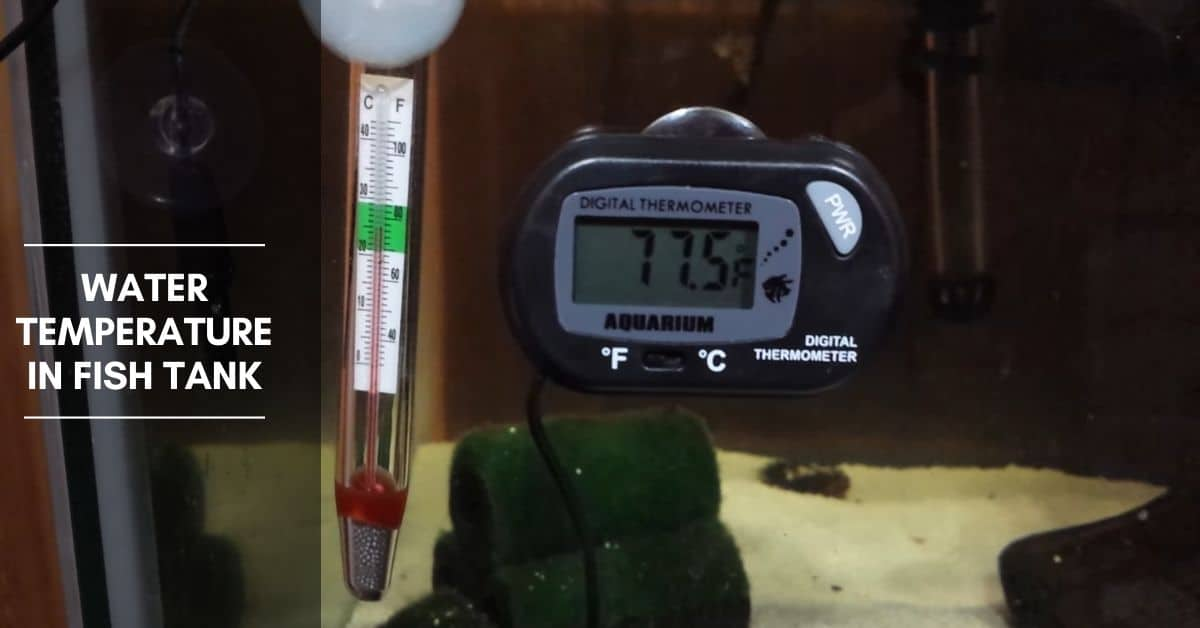 Water Temperature in Fish Tank – How to Adjust It in Your Aquarium?