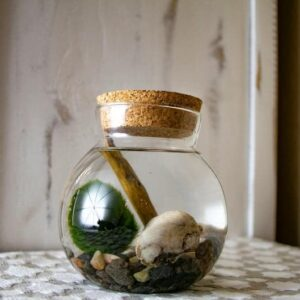 Marimo Moss Ball Terrarium Kit