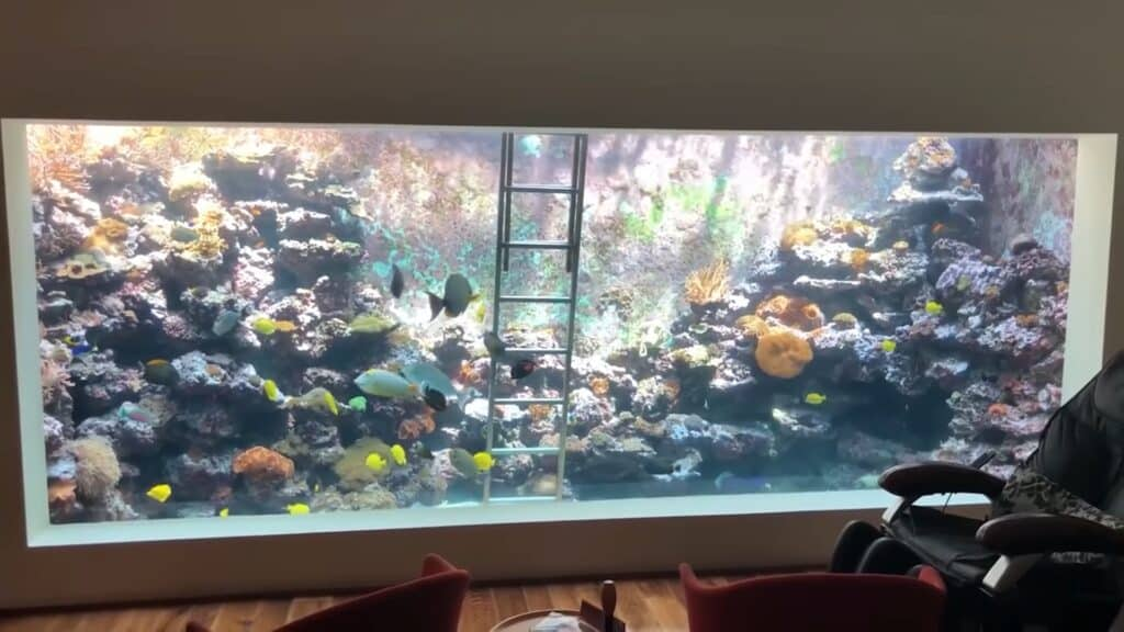 Eli's 10,000-gallon aquarium