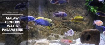 Malawi Cichlids Water Parameters | Temperature, pH and GH