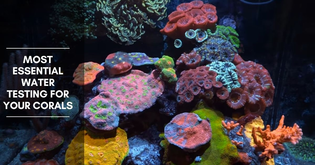 13 Most Essential Water Testing for Your Corals.