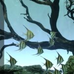 Can Angelfish Live in Cold Water? Do I Need to Add a Heater to the Tank?