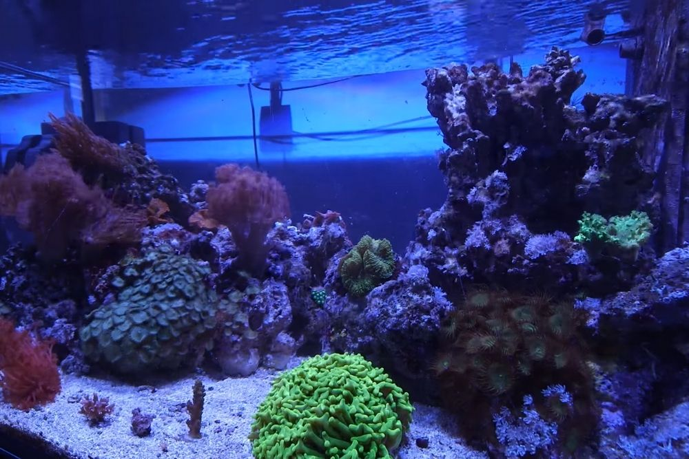 Reef Lighting