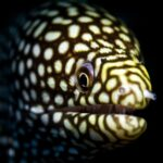 Moray Eel Size and Tank Size for Saltwater Eel Species