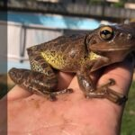 Tree Frog Species – Identification, Habitat, and the Calls They Make