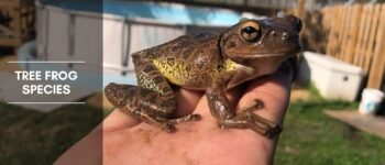 Tree Frog Species - Identification, Habitat, and the Calls They Make