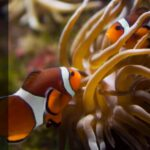 What Do Clownfish Eat, and How Often Do They Need to Eat?