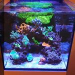 Is Nano Tank a Good Option for a Beginner?