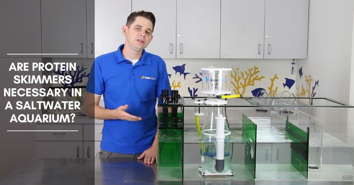 Are Protein Skimmers Necessary in a Saltwater Aquarium?