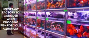 Important Factors to Consider When Choosing Fish For Your Aquarium