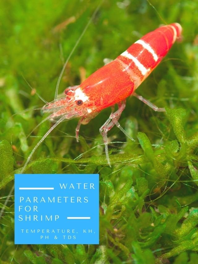 Water Parameters Needed For Shrimp: Temperature, KH, pH & TDS