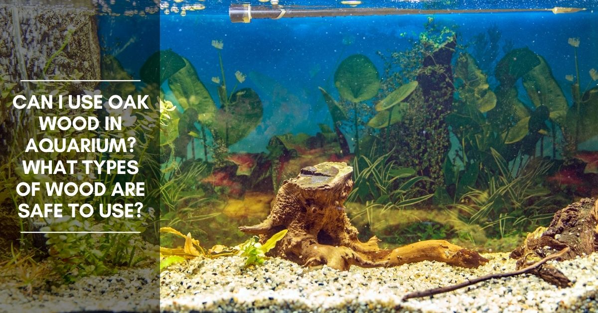 Can I Use Oak Wood in Aquarium? What Types of Wood Are Safe to Use?